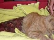 Algun desgraciado despelleja gato vivo