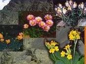 Libro Flora Amenazada Endémica Sierra Nevada