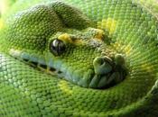 Para gustos, reptiles.