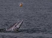 """Algunos científicos califican delfines como """"personas humanas"""""""