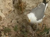 Fauna Cabo Tres Forcas