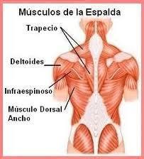 El complejo de los ejercicios la hernia intervertebral