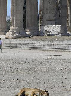 De cómo viven los perros callejeros en Grecia