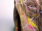 Elefante Entero