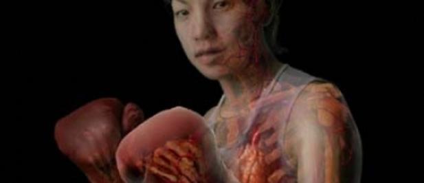 Una linterna magica permite ver en 3d el interior del for Cuerpo humano interior