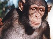 estudio Centro Investigación Primates Atlanta demuestra rango social afecta