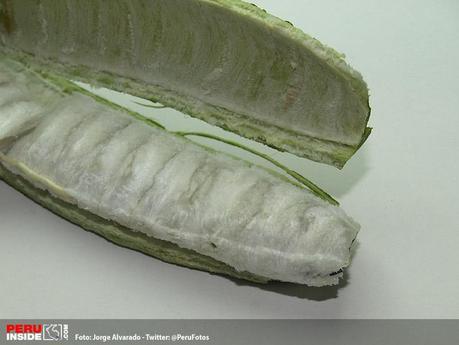 foto pacay fruta peru