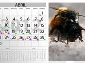 Calendario Lunar 2012 (Abril)