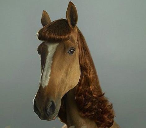 Trenzas para caballos - Imagui
