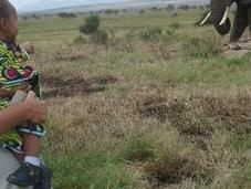 'Papá, dile mate elefantes'