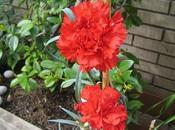 Flores blog Dorisalon (como siempre flores muestran hermoso este planeta, creación