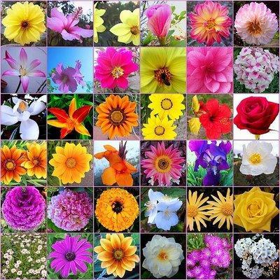 Ocho arbustos de floraci n f ciles para tu jard n paperblog for Arbustos con flores para jardin