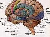 Datos curiosos cerebro humano ¿cuántas quedan usted?