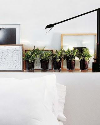 plantar en cristal con vasos