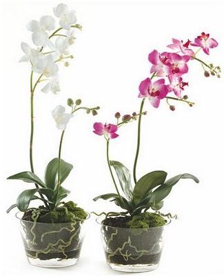 macetas de cristal para plantas
