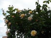 Significado flores plantas