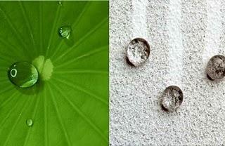 Efecto Lotus: El efecto antiadherente de la naturaleza