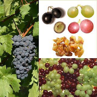 En una alimentación equilibrada, el vino