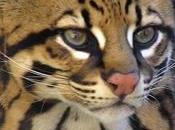 Argentina crean técnica clonación para proteger animales extinción