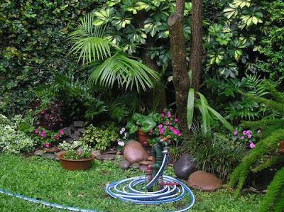 10 plantas de sombra para su jard n paperblog for Arboles de jardin para sombra