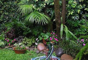 10 plantas de sombra para su jard n paperblog - Plantas de sombra para jardin ...