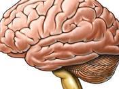 Científicos mexicanos logran nuevas teorías Alzheimer banco cerebros