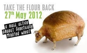 Take the flour back, los GM cereal killers, en concierto