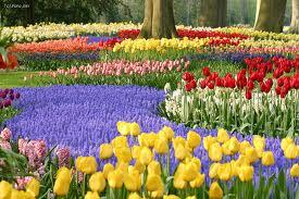 Jardines del mundo paperblog - Jardines de tulipanes en holanda ...