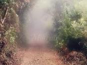 bosque encantado...