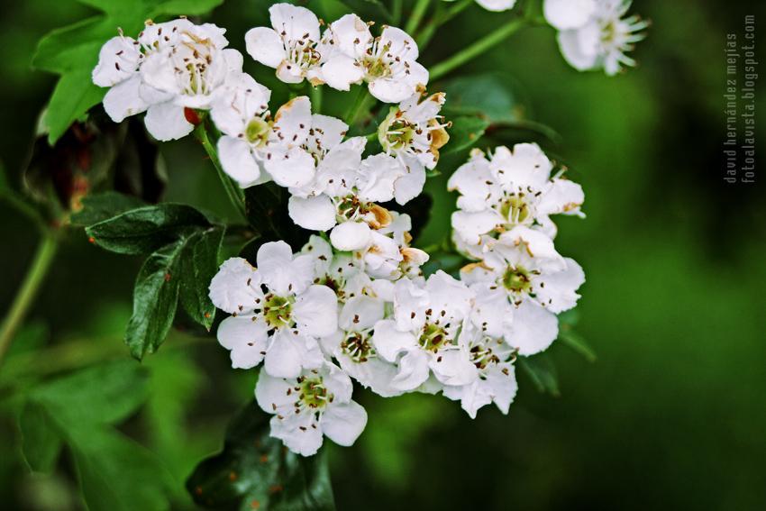Pequenas Flores Blancas Que Hacen Formas Paperblog
