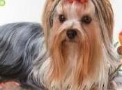 Adiestramiento canino basico