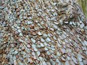 Alguna usted dicho sembrar matica dinero? presento curiosidad tronco monedas
