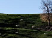 Contando ovejas. Capítulo