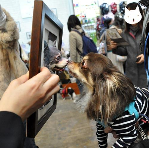 perro en 3D