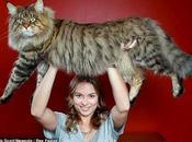 tamaño tres veces mayor gato normal. R...