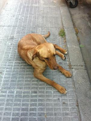 PODENCA BUENISIMA Tirada en la calle y aun asi enseña su barriga esperando que alguien la recoja...(TOLEDO)