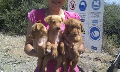 Tres cachorritos abandonados en el pantano de Córdoba.