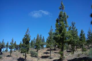 Isótopos radiactivos y árboles isleños en medio de Sierra Morena