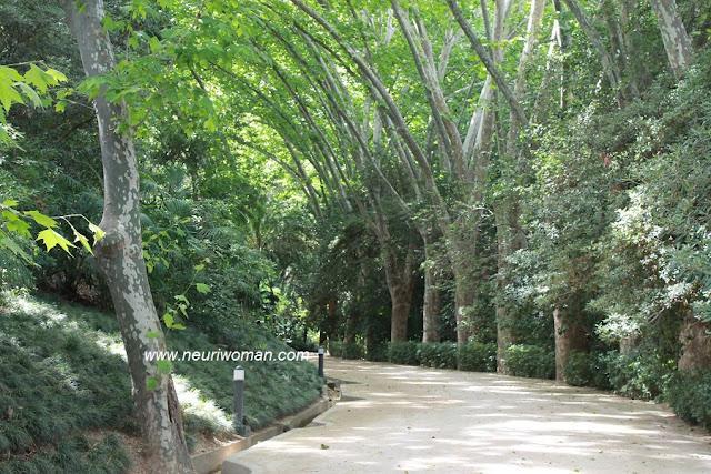 Marqueses por una noche en el jard n bot nico de m laga for Jardin botanico de malaga