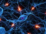 exagerado papel neuronas espejo