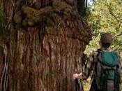 Región Ríos: Áreas protegidas Selva Valdiviana tienen guía turística