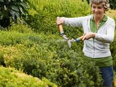 Diseño jardines arbustos perennes