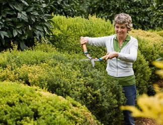 Dise o de jardines con arbustos perennes paperblog for Arbustos perennes para jardin
