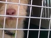 Pegy, cruce terrier, maltratada... busca hogar. (Murcia)