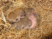 Camada ratones...