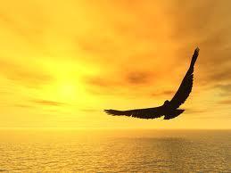 Es hora…..Anímate a volar !