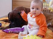 niños crecen perros sanos