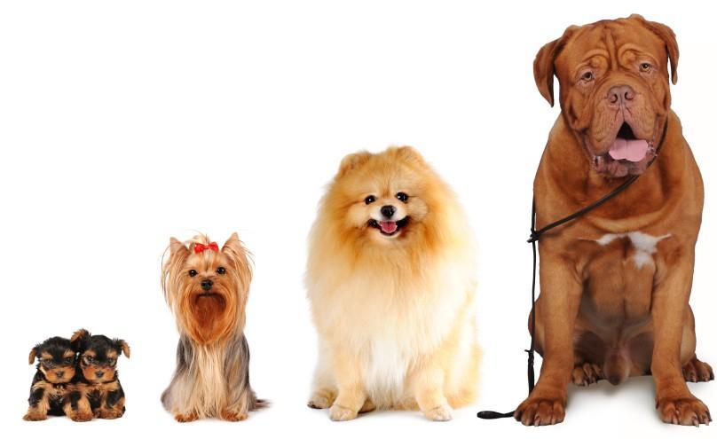 Nombres para perros machos y hembras