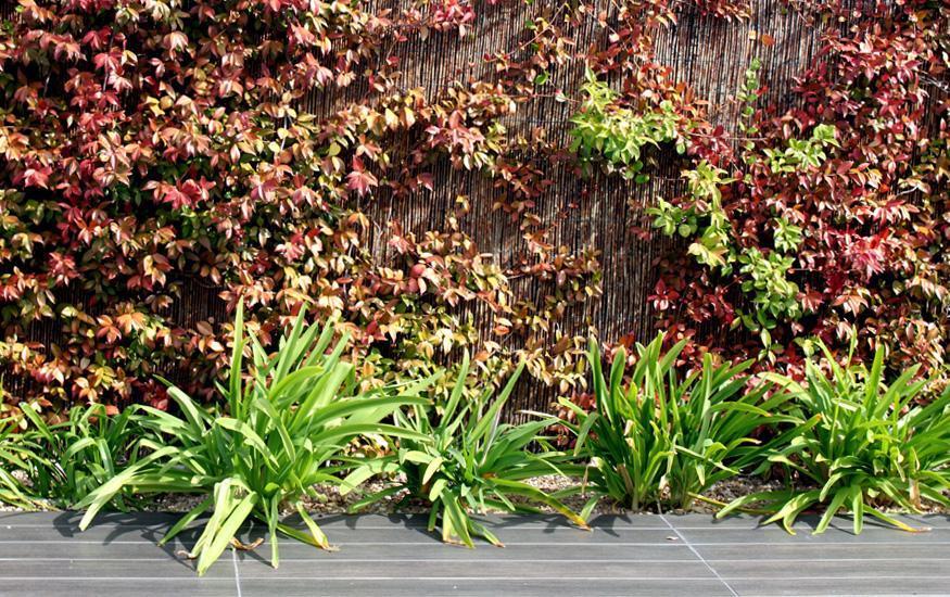Plantas de dise o en el jardin paperblog - Plantas para jardin ...