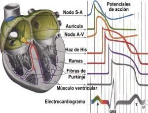 La hipertensión y la nutrición del perro con insuficiencia cardiaca (sodio, potasio y magnesio)